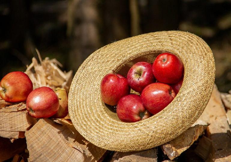 apple day para que serve