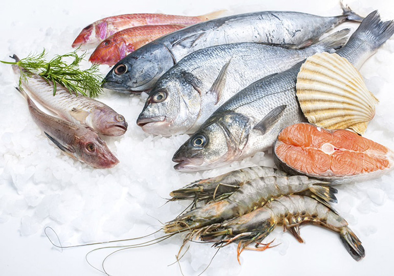 peixes do mar